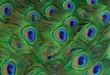 plumes de cuir