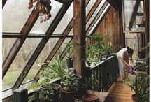zieleń dom i ogród