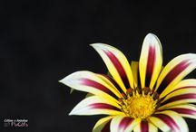 PixCèl's Flore / Fleurs, végétation...  PixCèl's Création