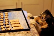 ricette x cani