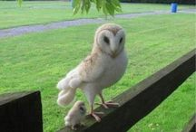 Owls = Happiness