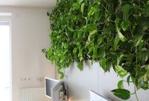 Indoor Vertical Garden Ideas