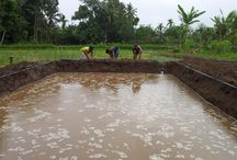 MONTONG FISH PONDS / MY PROJECT AT SURANADI...SELAT VILLAGE