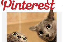 Pin For Profits  / Great articles and strategies for growing your business with Pinterest.