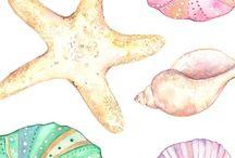 seashells watercolor
