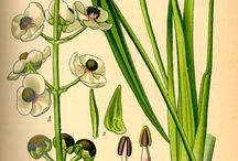 disegni botanichi