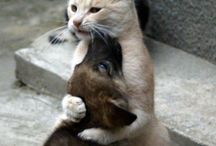 kočka / zvířátka