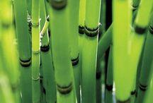 Blooms & Greens