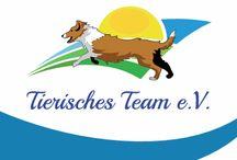 """TSV Tierisches Team e.V. / Wir sind ein Team aus ehrenamtlich tätigen tierlieben Menschen, die sich für Hunde in Not einsetzen, sei es durch Hilfe vor Ort (Sach- und Geldspenden) oder durch die Vermittlung von Hunden in ein eigenes Zuhause.   Gemeinsam mit unserem Partnerverein Animals Need Us/ANU kämpfen wir gegen das Elend der Hunde in Rumänien.   Mit Ihrer Hilfe können wir noch mehr Gutes bewirken. Denn:  """"Ein Hund hat in seinem Leben nur ein Ziel - sein Herz zu verschenken""""  https://www.facebook.com/tierisches.team/"""
