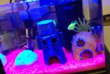 aquarium stupidity