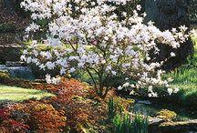 Plants: Understory Trees