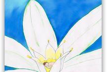 Fleurs de Bach / Memobach .fr = 38 illustrations des Fleurs de Bach