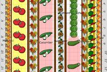 növények/zöldség