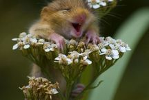 Cute overload! / Animals and kids doing what they do best / by Jamie Strand