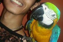 parrot ala atung