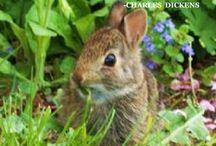 Beautiful Animals and Wildlife / animals