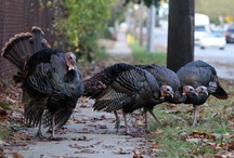 Signs of Thanksgiving