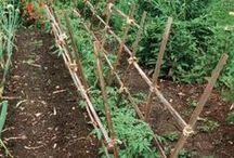 Treillis de tomates
