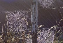 Spider Webs / by Wendy Millard