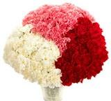 #Carnations