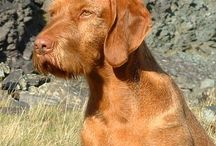 Other great gundogs