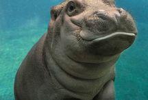 Hippo world