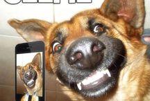 Dog selfie's