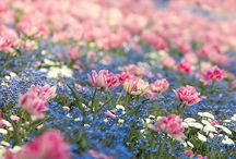 • Flowers