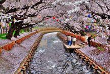 Jardin 2016 : Kyoto / Direction Kyoto pour créer un jardin zen et reposant