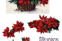 Obrazki - Boże Narodzenie - Kwiaty, gałązki