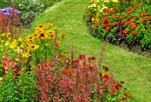 Flowerbeds / by Mary Susan Neill