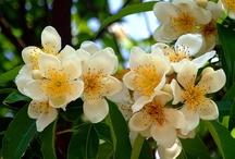 お気に入りの花達2