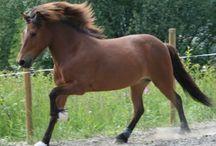 Hestebursdag