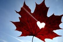 I'm a proud Canadian! / by Julie H