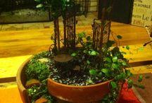 Miniture Gardens / Bonsai