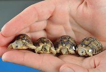 Tortoise / I would like to have a tortoise