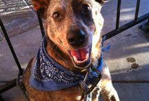 Blog JuegaConTuPerro.com / El Blog de Frida & Chelsee donde encontraras todo sobre perros, accesorios y juguetes.