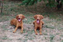 JoWaCe / JoWaCe is een bemiddelingsbureau Huiselijke Opvang Huisdieren. Kijk voor meer informatie op: www.jowace.simplesite.com     Graag delen en volgen!!!