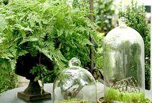 Indoor Gardens / Bringing the outdoors inside.