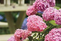 For the Love of Flower Gardens