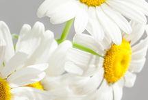 Bílé kvetiny