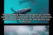 Animals: Wildlife