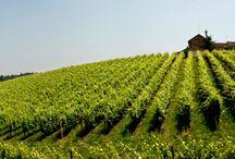 Bava Winery