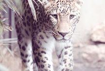 Tiere/Animals / Hier sind Tier Bilder was ich fotografiert habe :)