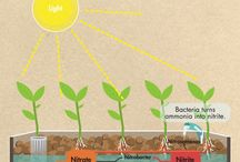 Teknologi pertanian/peternakan