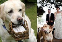 Pets & Weddings