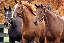 Things I Love 8 - horses, horses and more horses / by Tommie Sue Pierce Moore