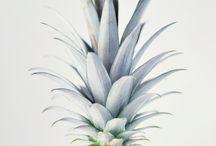 Art: Tropical Fruit / Art & illustrations of tropical fruit.