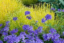 Garden - Plants