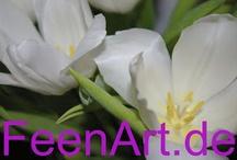 Frühlingsboten: Tulpen, Ranunkel, Flowers, / FeenArt-Fotografie - Frühlingsboten: Tulpen, Ranunkel, Flowers, Blumen, Spring, ...  | www.FeenArt.de | Claudia Böttcher